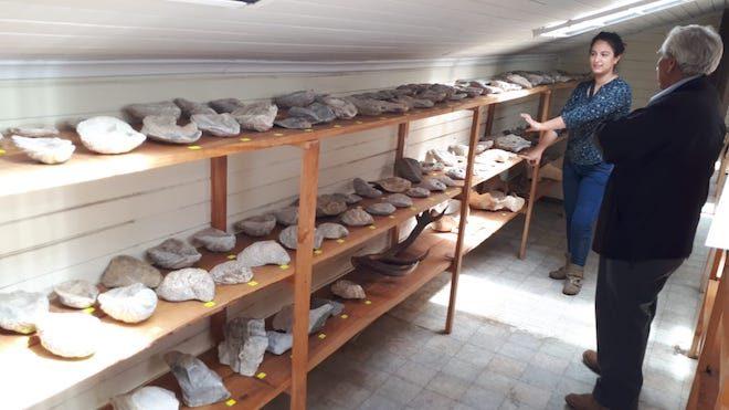 Aduana y Consejo de Monumentos Nacionales clasificaron fósiles y otras especies decomisadas en Coyhaique