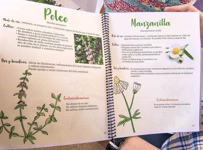 Difunden propiedades de plantas medicinales a usuarios del Cesfam San Pedro