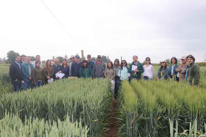Productores de semillas visitan estación de prueba de variedades de cereales del SAG