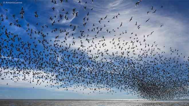 Proyecto destacará la biodiversidad del Santuario de la Naturaleza Bahía Lomas
