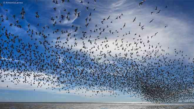 Oceana y FIMA ponen a disposición de las y los constituyentes estudio que compara protección del medio ambiente en constituciones de 30 países
