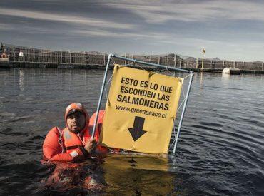 """Greenpeace: """"El doble escape de salmones muestra a una industria digna de un capítulo de Los Tres Chiflados"""""""