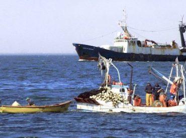 Cámara aprueba proyecto de diputado Flores que permitirá a pescadores artesanales capturarsalmonesfugados