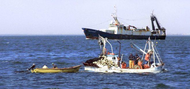Desembarque pesquero en la Región del Biobío totalizó 101 315 toneladas en junio