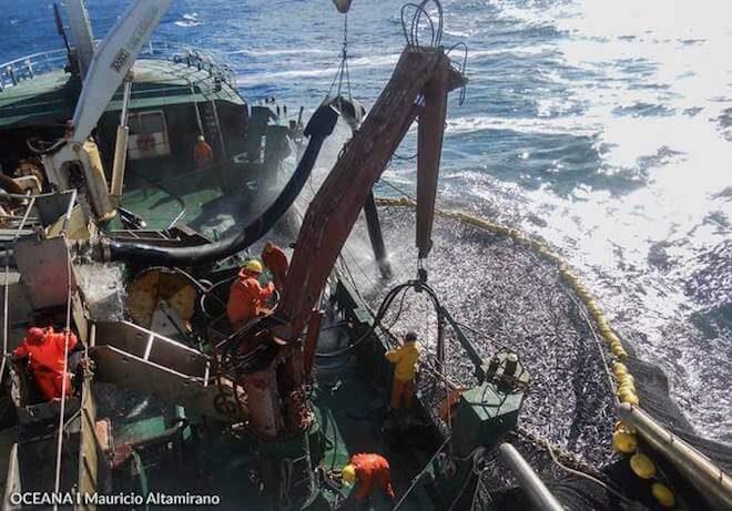 """Pescadores Industriales quieren Ley Especial de Trabajo Pesado: """"La política no ve los problemas reales"""""""