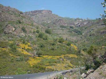 Plantas invasoras: el insospechado impacto de los caminos en la biodiversidad de las montañas