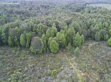 Coordinan plan de fiscalizaciones por aumento de tala ilegal de bosque nativo en Chiloé