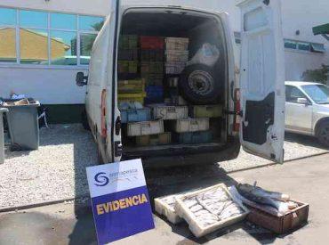 Sernapesca incautó 2.525 kilos de pescado sin acreditación de origenen la Vega Monumental