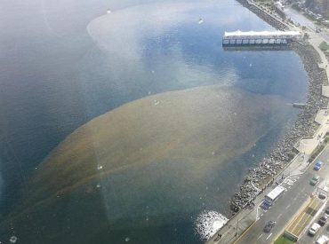 Partido Progresista cuestiona pasividad que ha tenido la municipalidad de Puerto Montt en la contaminación del borde Costero