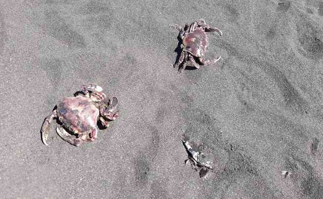 Sernapesca constató varazón de sardinas y anchovetas en Boca Sur