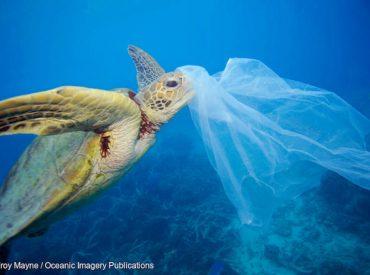 Estudio revela impactante alcance de la contaminación: el plástico llega a las mayores profundidades del mar