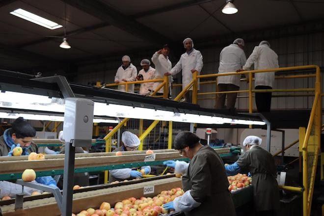 Industria de la fruticultura lidera el repunte de las exportaciones en Malleco