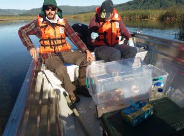 Proyecto de investigación busca reconstruir la biodiversidad del humedal del Río Cruces