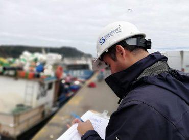 Estrategia de Sernapesca permitió bajar a niveles históricos el desembarque de fauna acompañante en la pesquería pelágica en Biobío