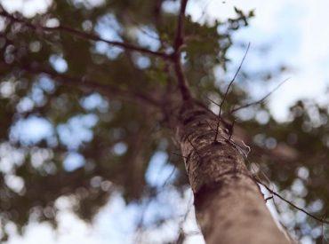 La captura de carbono y el impulso a la forestación