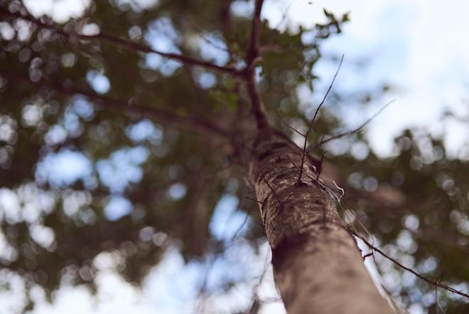 Propietarios forestales de Aysén avanzan en producción de dendroenergía mediante tecnificación