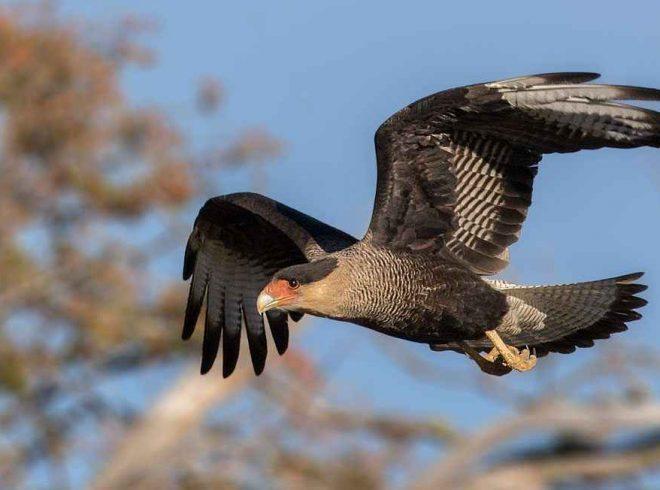 SAG Biobío llama a cazadores a respetar cuotas y especies de caza