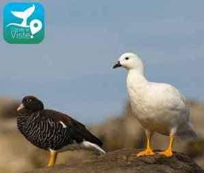 Invitan a utilizar aplicación móvil para registrar fauna marina en Calfuco