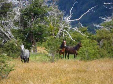 Científicos detectan nueva presencia de mamíferos exóticos en siete islas de la Reserva de la Biósfera Cabo de Hornos