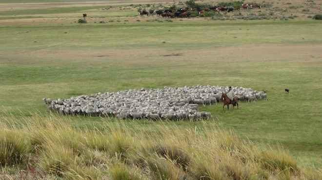 Seremi de Agricultura celebra la incorporaciónde aproximadamente8 mil hectáreas para uso agropecuario en la isla de Tierra del Fuego