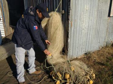 Con 2 toneladas de salmón chinook incautadas finalizó temporada de pesca de esta especie en cuenca del Toltén