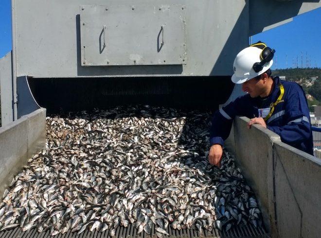 Fiscalización de Sernapesca permite registrar histórico 2% de fauna acompañante en desembarques