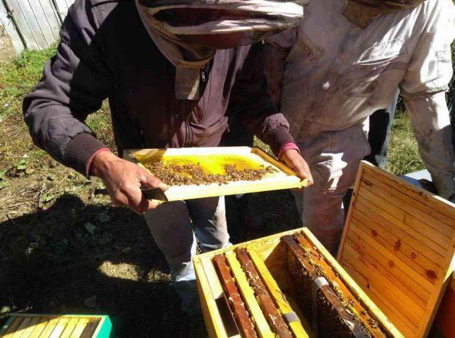 Miel monofloral de Alto Bío Bío es certificada como única en el mundo