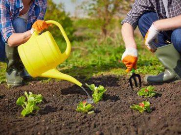 Cómo el IoT ha ayudado en la revolución de la agricultura