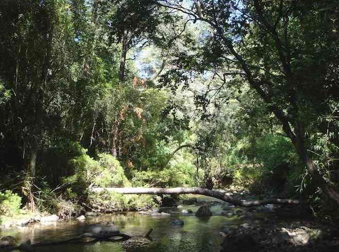 Reserva nacional Nonguén será parque nacional durante este año