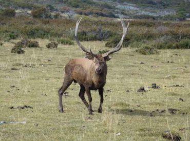 Temporada de caza: SAG recuerda la normativa y advierte que fiscalizará