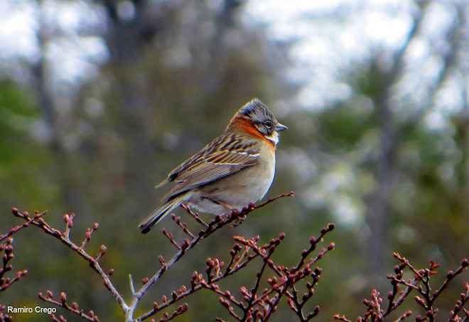 El incierto futuro de las aves del fin del mundo  frente al cambiante escenario ambiental