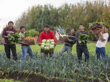 INDAP Araucanía busca potenciar emprendimientos de jóvenes rurales de la región