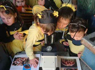 En el marco del Día Mundial del Medio Ambiente Integra y SAG presentan texto infantil que destaca el gran aporte de las abejas