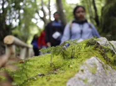 Los microbosques como relato de un turismo único en el mundo
