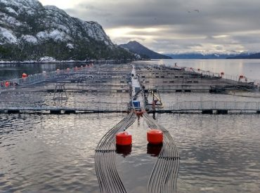 Asociación de la Industria del Salmón de Chile A.G. informa respecto a denuncia contra empresa salmonera