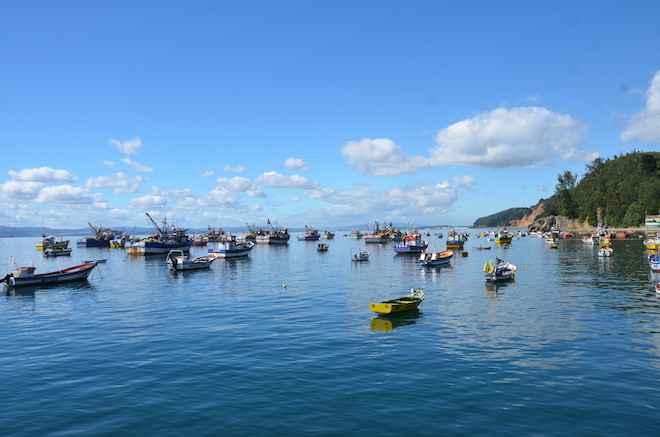 Chile implementa Bitácora Electrónica de Pesca desarrollada por WWF para mejorar control y disponibilidad de datos