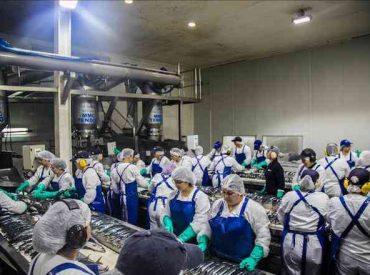 Presidente de los Tripulantes de la Pesca Industrial del Biobío pide prorrogar la ley de jibia