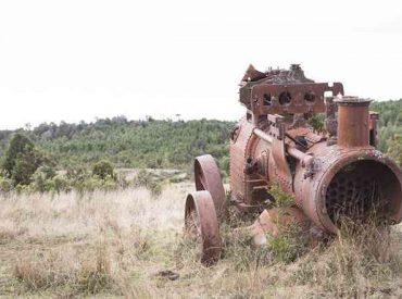 Reconstruyen historia en torno a la extracción de alerce en la Cordillera Pelada