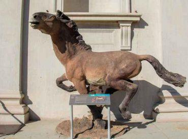 ¿Fue el cambio climático o el humano? Lo que nos recuerda la extinción de los caballos prehistóricos de Chile y Sudamérica