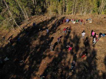 Con ensayos de plantación se trabaja en la conservación del Queule: la comunidad es protagonista en proyecto Especies Amenazadas