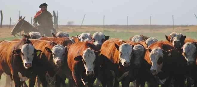 """Fedecarne ante autorización del SAG para internación de ganado bovino en pie desde Argentina: """"La medida tomada pone en riesgo la condición sanitaria del país"""""""