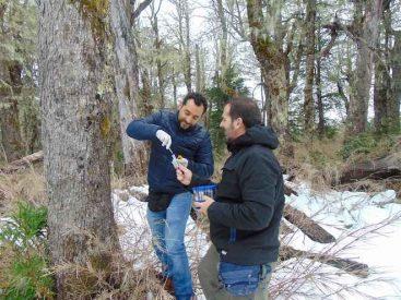 """Científicos chilenos encontraron la madre de las levaduras """"Lager"""" en los bosques nativos de la Patagonia"""