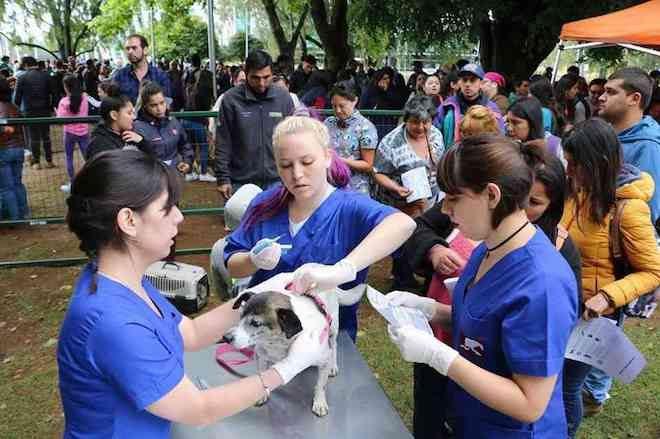 Valdivia construirá primera veterinaria municipal gratuita de la región