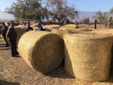Diputado Flores gestiona donación de 60 toneladas de forraje desde las regiones de Los Ríos y Los Lagos para animales de la zona norte