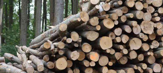 La dendroenergía como eje productivo: difunden manejo sustentable del bosque nativo en Aysén
