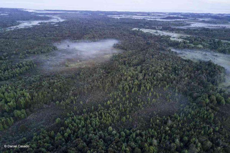 Cuidado de los bosques y consumo responsable: lecciones de la pandemia