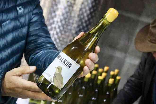 """Viñateros de Hualqui presentan vinos biodinámicos, """"elaborados en equilibrio con el medio ambiente»"""