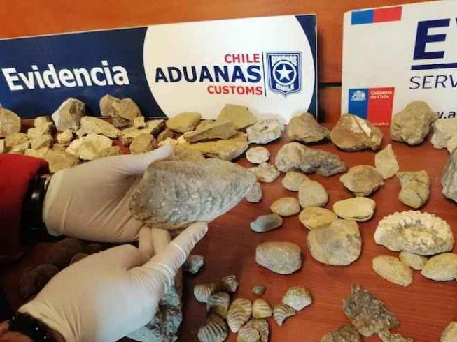 Fiscalizadores de Aduanas detectan contrabando de más de 100 piezas fósiles