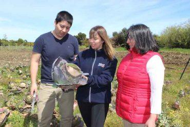 Familia mapuche productora ingresa como proveedora del programa de alimentación escolar
