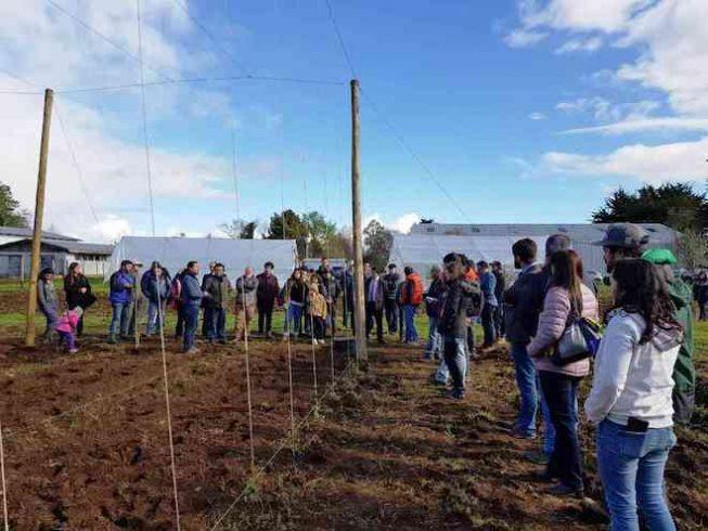 Con plantación de lúpulo se dio inicio a estación experimental en Valdivia